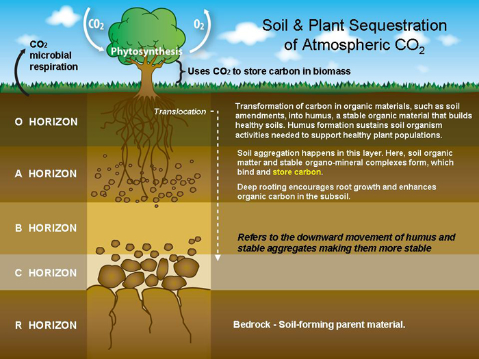 Give The Diagram Ofsoil Profile - Science - Soil