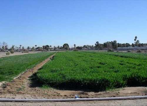 Phoenix-Goodyear Airport Superfund Site Crop Irrigation