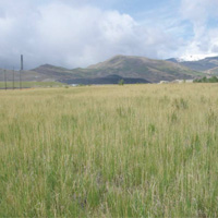 Perennial grasses now cover the Site